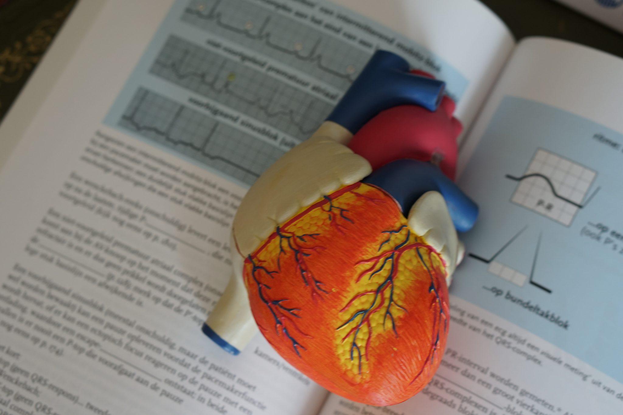 anatomy book heart